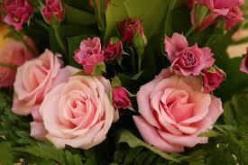 http://t2.gstatic.com/images?q=tbn:3N5Oe8uiImF6ZM:http://plantaromes.canalblog.com/images/Roses_Axelle_1.jpg