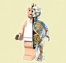 lego-man-skeleton