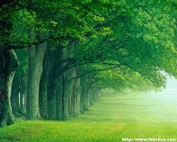 طبیعت جنگل سر سبز