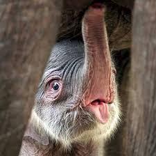 baby elefante appena nato