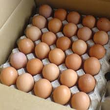 http://t2.gstatic.com/images?q=tbn:6RHWWK3lAAGTrM:http://gambar.iklanmax.com/20081215/206434/telur-organik-natur-aid.jpg