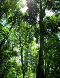 rainforest is destroyed?