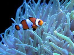 Apakah Ikan Sadar Mereka Berada Dalam Air ?