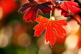 ترنم پاییز(حراف گذشته)
