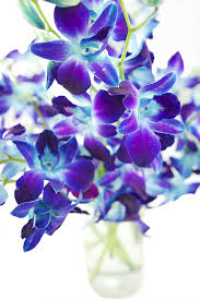 What Is Flower Food by Amazon Com Kabloom Exotic Blue Sapphire Orchids 10 Fresh Blue