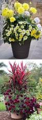 1637 best container gardening ideas images on pinterest