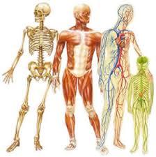 مقاله ای درمورد بدن انسان