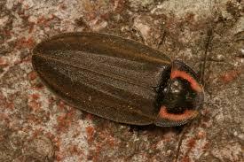 winter dark fireflies what u0027s bugging you