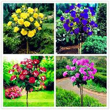 829 best bonsai images on pinterest garden supplies bonsai and