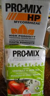 are these a lost cause new grower u0027s primer cc forums