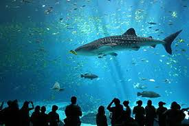 most beautiful aquariums