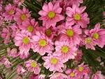 ดอกไม้ สวยงามงานวันเกษตรมช.2552 (ชุด 1) - GotoKnow
