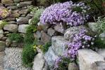 Images for steingarten anlegen tipps