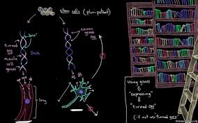 cellular communication video cells khan academy