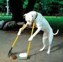 perro y excrementos
