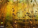 วอลเปเปอร์ National Geographic ประจำมกราคม 2013 สวยเด็ดทุกภาพ ...