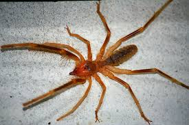 Sun spiders