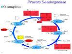 7 WF <b>Piruvato Desidrogenase</b> u