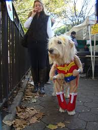 The Tick Costume Halloween by Do This Now To Keep Your Dog Safe And Happy In A Dog Halloween