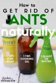 How To Get Rid Of Kitchen Sink Odor How To Get Rid Of Ants In Your House Natural U0026 Safe Diy Ant Killer