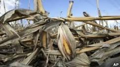 Ano de seca global gera temor de nova crise de alimentos