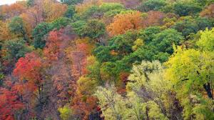 dnr fall color finder live season wcco cbs minnesota