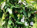 ผลิตภัณฑ์สมุนไพรไทย(Herb)เพื่อสุขภาพคุณ สรรพคุณสมุนไพรรางจืดราชายา ...