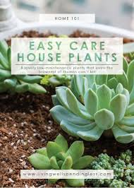 low maintenance houseplants easy care house plants