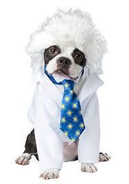 Dog Costumes Halloween 34 Pup Razzi Celebrity Inspired Pet Costumes Images