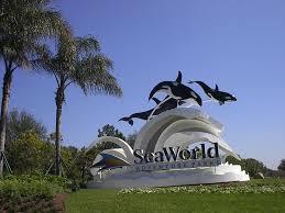 seaworld black friday deals 62 best orlando florida images on pinterest orlando florida