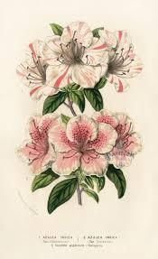 34 best van houtte flower prints 1845 images on pinterest
