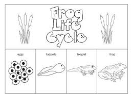tadpole coloring page best 25 frog life cycles ideas on pinterest life cycles spring