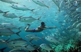 images?q=tbn:ANd9GcQC5dejxTby1vTndMygMUxJNkrRFuyVh5K c0EBEVTcvuASBCJxQw - BBC | Human Planet | Okyanuslar