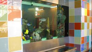 chicago custom aquariums u0026 fish tank company