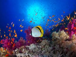 ocean life teaching guide scholastic