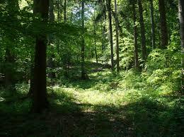 Forêt             Images?q=tbn:ANd9GcQDCwEWiuq5axYV8oC3KtZ7bCjivazsR8ASMZ1bjqH2BB1C9fiw