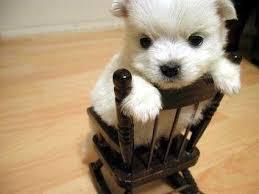 Kutya a széken