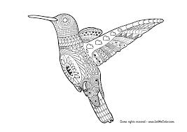 hummingbird coloring page u2013 letmecolor