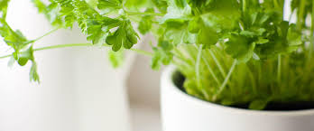 the 9 easiest herbs to grow indoors more com