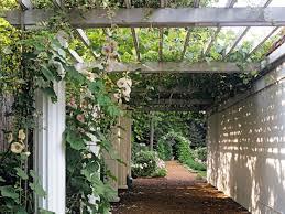 15 climbing vines for lattice trellis or pergola hgtv