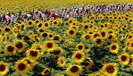 2009 Tour de France - The Big Picture - Boston.