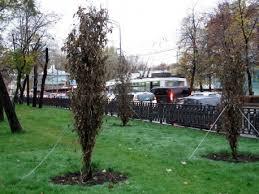 Высаживать деревья в Москве будут сами жители города