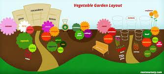 companion planting vegetable garden layout