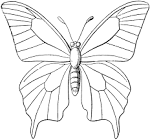 Butterfly Outline | ClipArt ETC