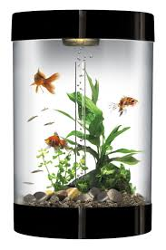Home Decor Online Stores India by Fish Tank Order Fish Tank Online Imported Guppies For Sale India