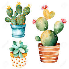 Succulents Pots For Sale by Watercolor Handpainted Plant Cactus And Succulent Plant In Clipart