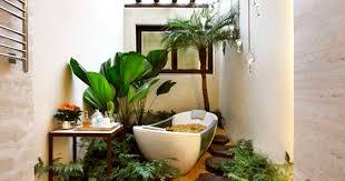 Tropical Themed Bathroom Ideas Tropical Themed Bathroom Ideas Blog Nurserylive Com Gardening