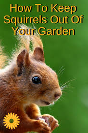 How To Keep Deer Out Of Vegetable Garden by Ways To Keep Squirrels Out Of Your Garden