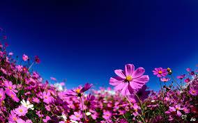 வால்பேப்பர்கள் ( flowers wallpapers ) - Page 19 Images?q=tbn:ANd9GcQI2IisHZIb1Ado5gbK4WwKY-GN6oGTKUZgb8xuu5kw07ssgMsr
