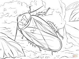 madagascar hissing cockroach coloring page printable animal